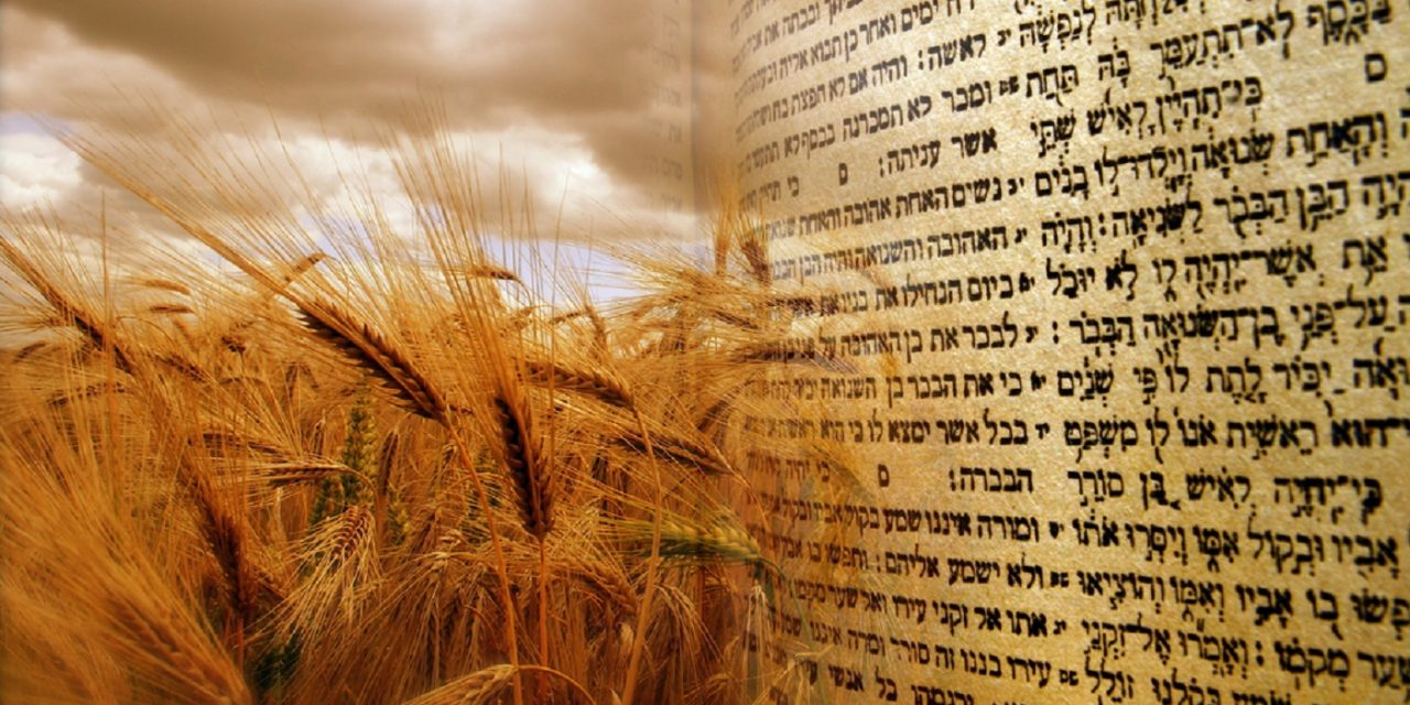 holiday-shavuot